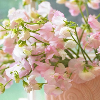 Seasonal Flowers for a Spring Wedding: Romantic or Rustic