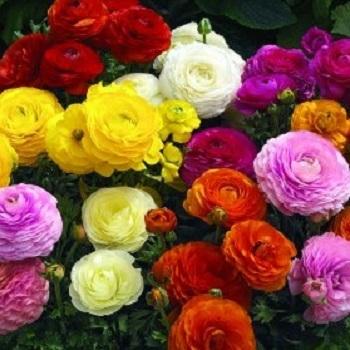 Seasonal Flowers for a Spring Wedding: Modern or Playful