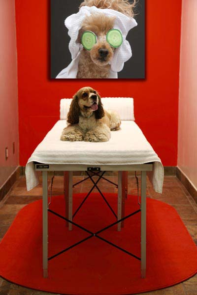Hotels In Vegas That Allow Pets